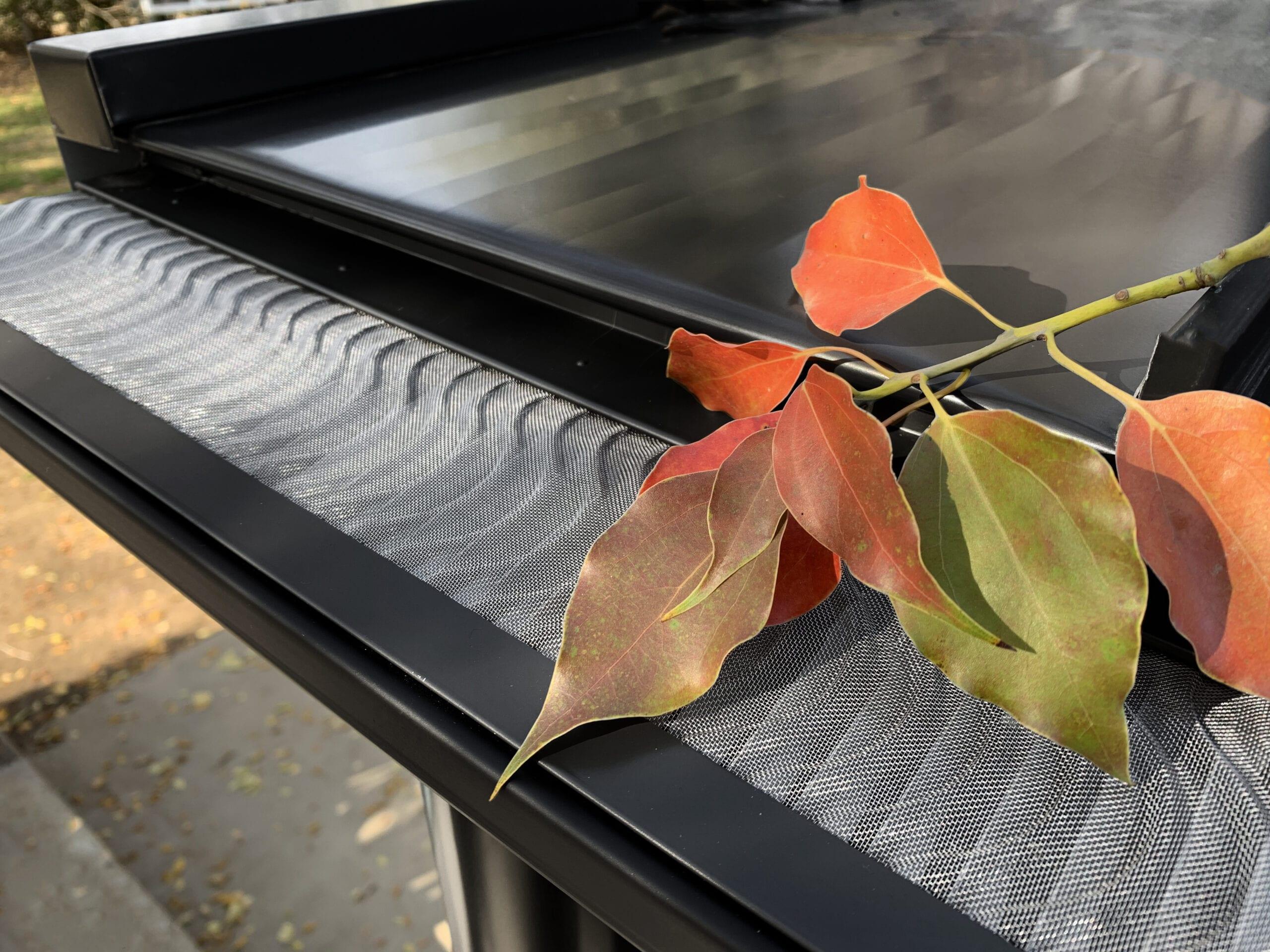 charcoal-valor-photo-leaf