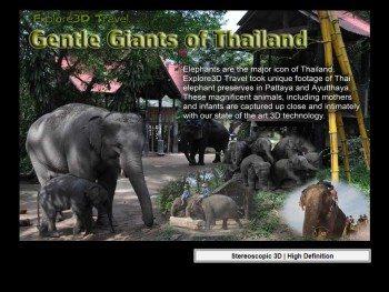 al-caudullo-productions-thailand-gentle-giants-of-thailand-elephants