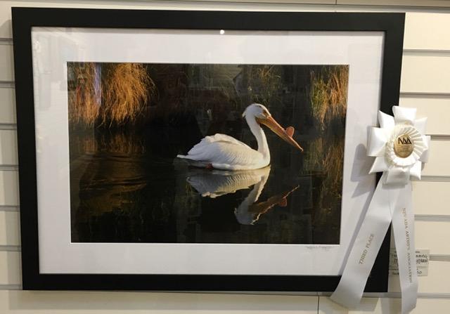 """""""Pelican Swimming"""""""