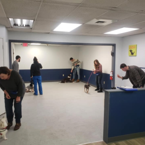 Dogs participating in a manners dog training class at Homedog Dog Boarding Resort & Dog Daycare in Columbus Ohio