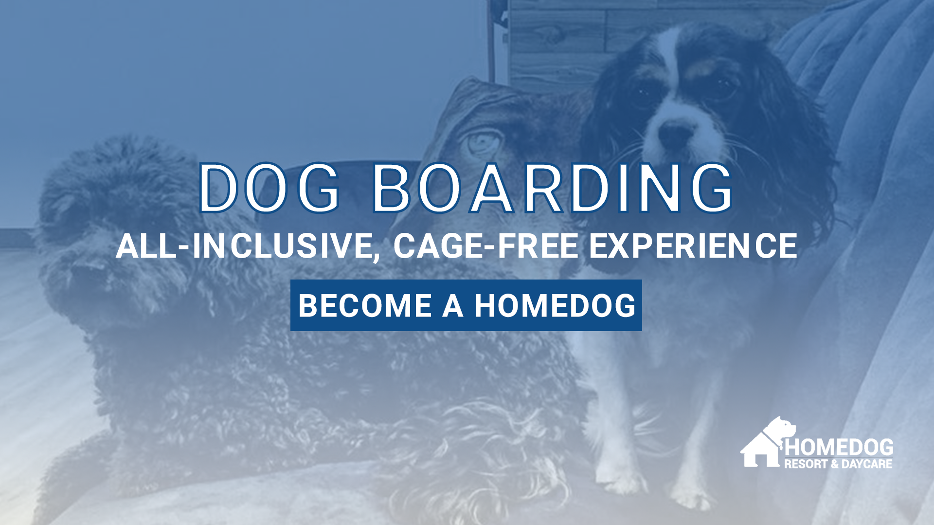 All-Inclusive, Cage-Free Dog Boarding at Homedog Resort & Daycare in downtown Columbus, Ohio