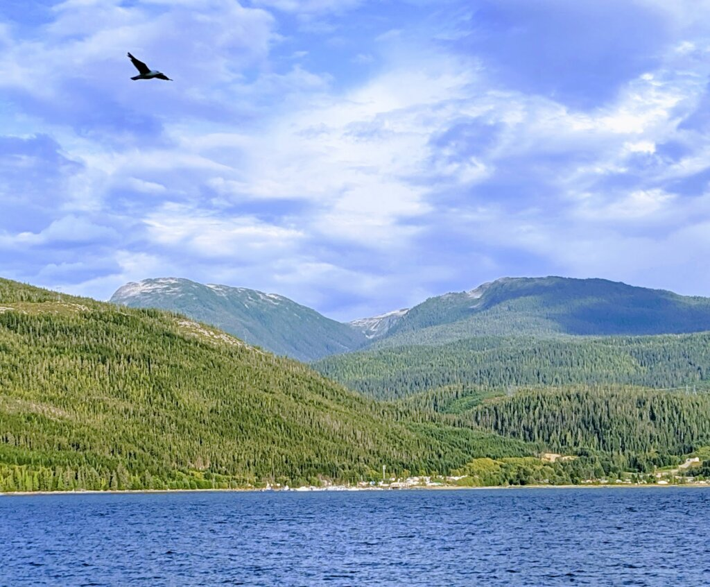 Douglas Channel with the Mountains behind and a hawk flying above