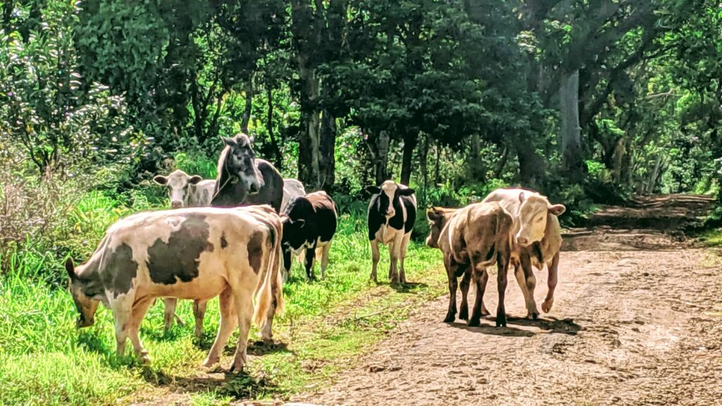 Hiking Trails with Animals in Eua