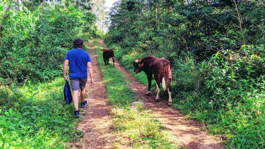 Sharing the Hiking Trail on Eua