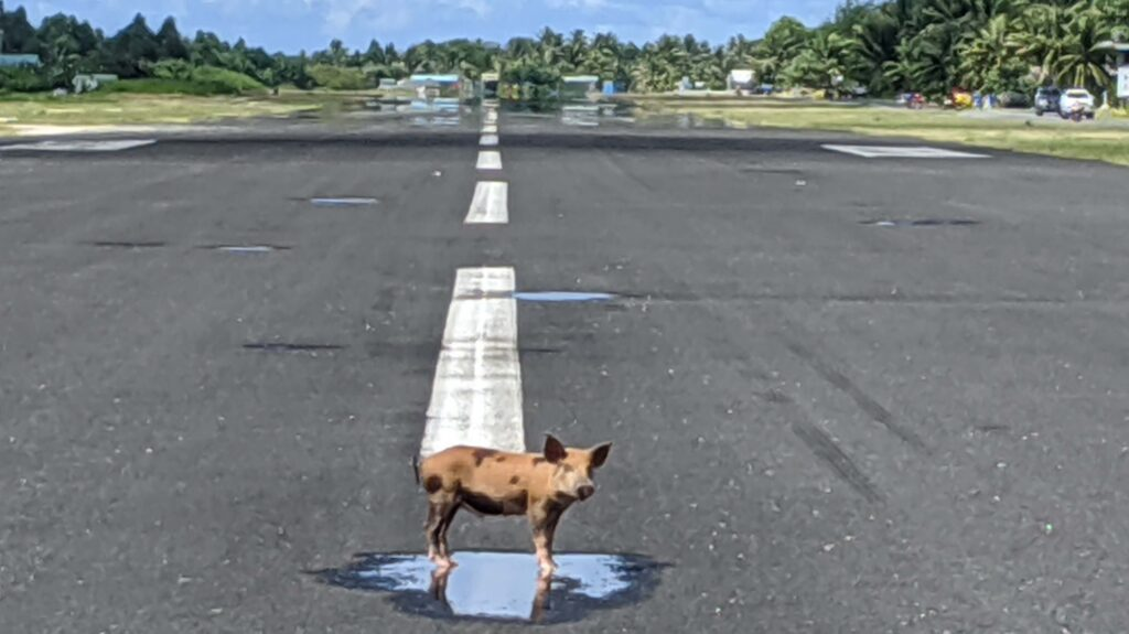 Tuvalu's lonely piglet on the tarmac make it a place worth a visit