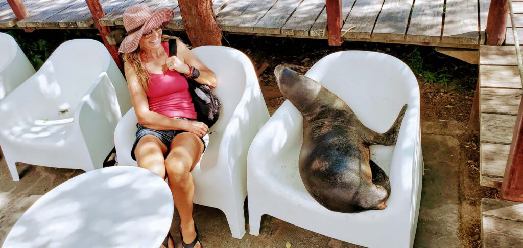 San Cristobal Galapagos has many a opportunity to see seals and even to sit down with them which make it available on any budget