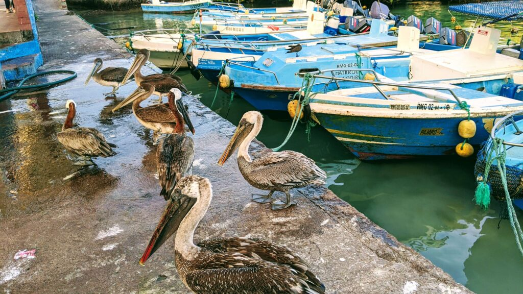 Galapagos on a Budget the Fish Market in Santa Cruz is yet another thing to do for free