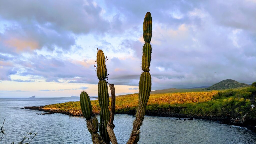 Cerro Tijeretas Galapagos a park that is free to the public and open to anyone on any budget