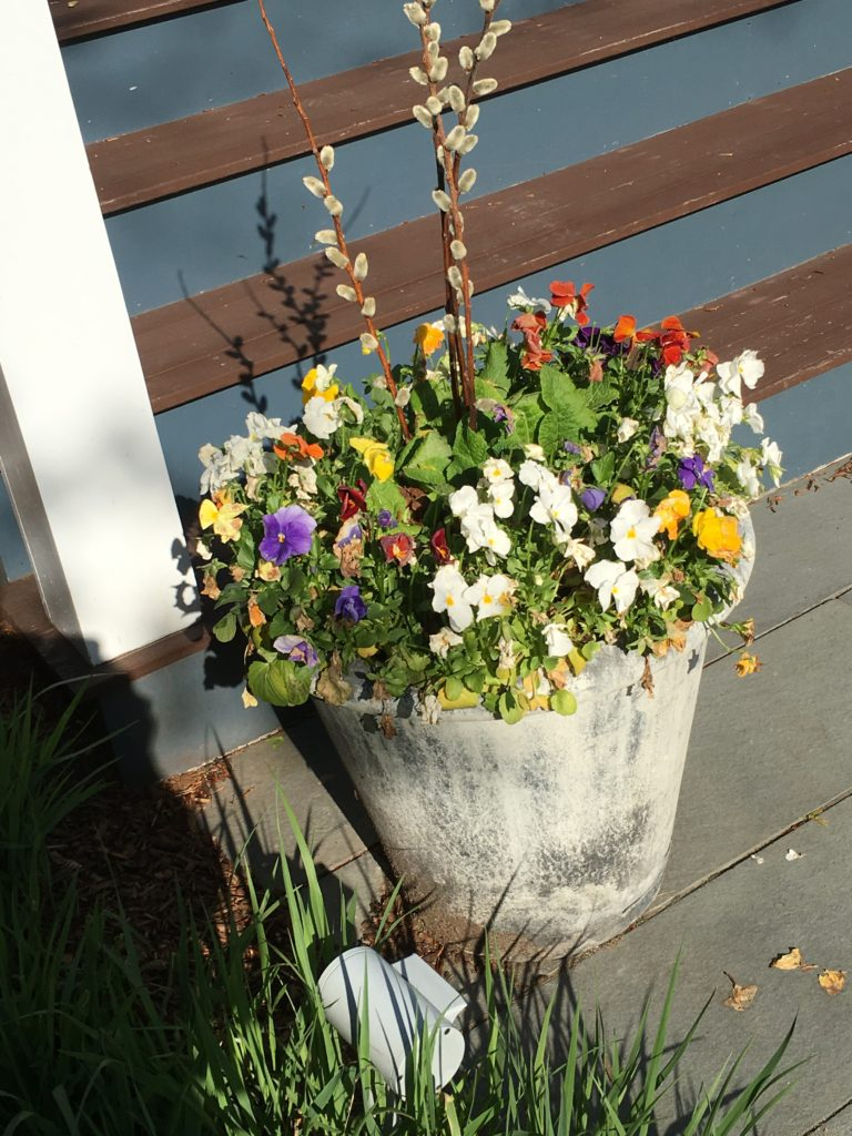 Newton MA Flowers