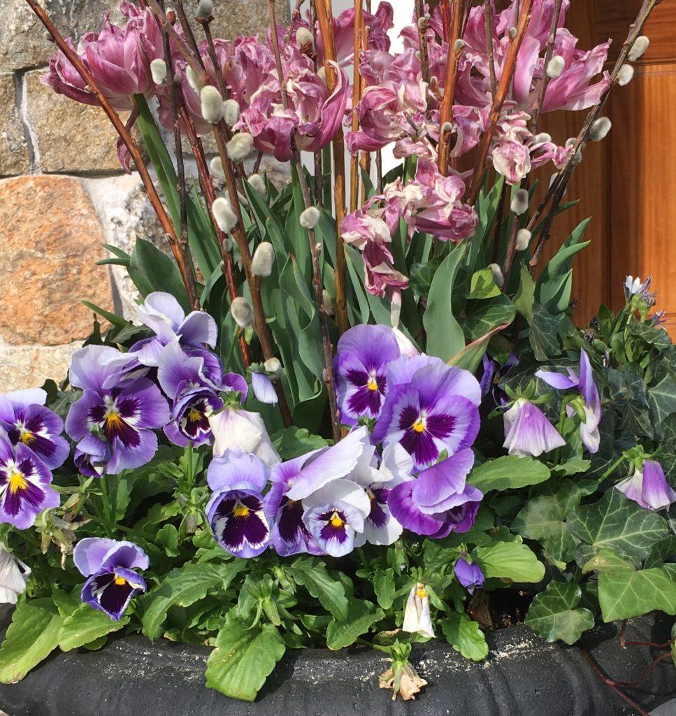 Wellesley flowers