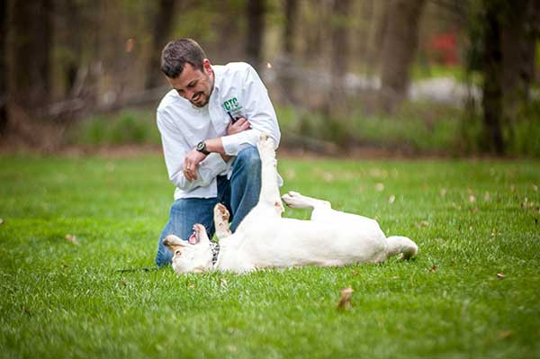 Board and Train Online Dog Training