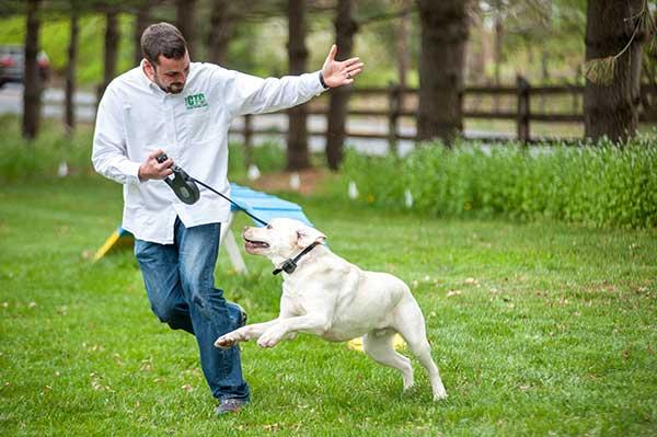 DIY Dog Fence Installation