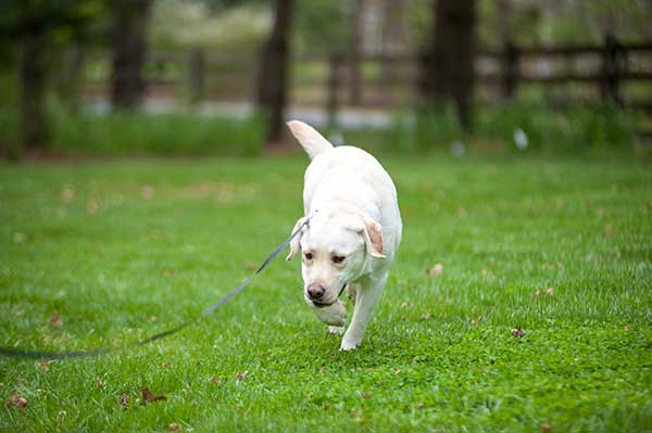 DIY Dog Fence Training