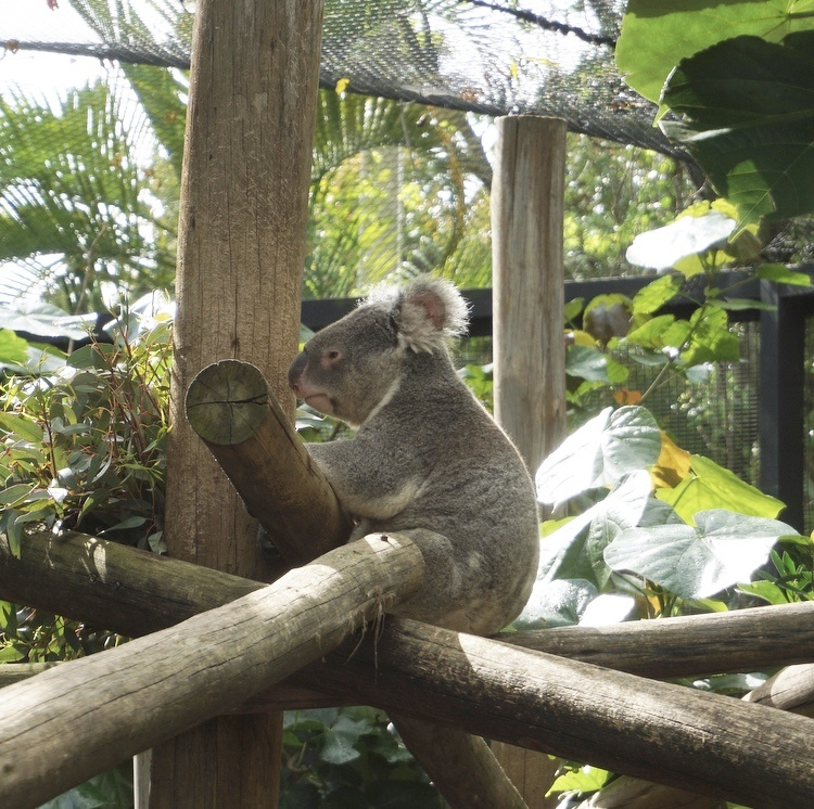 Go Wild At The Palm Beach Zoo