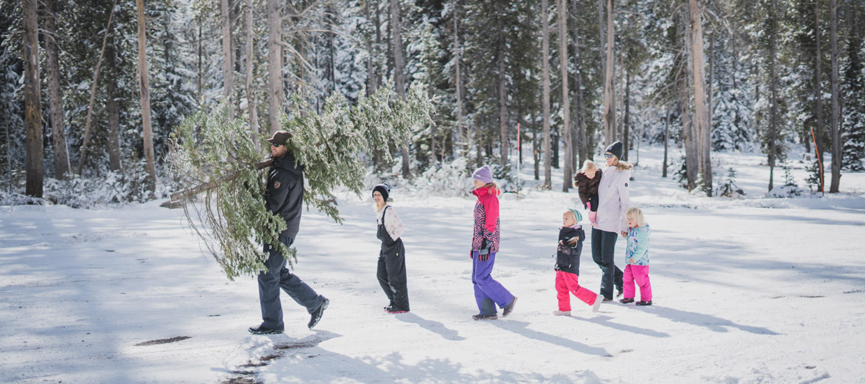 Family cutting a Christmas Tree in Bear Lake Montains