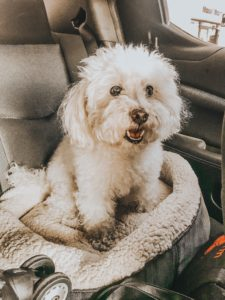 Alexis Alcala's pet dog Cookie on a road trip