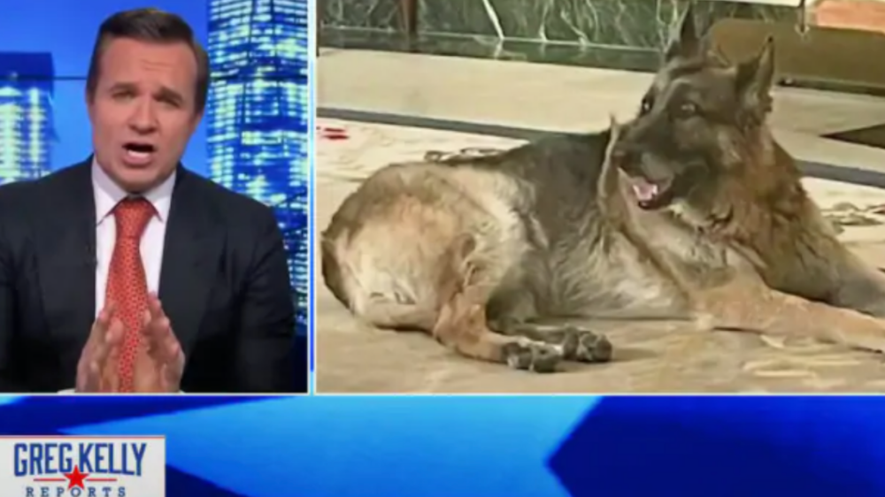 After Biden Excels in First Month, Newsmax Turns to Attacking the Bidens' Dog On Air