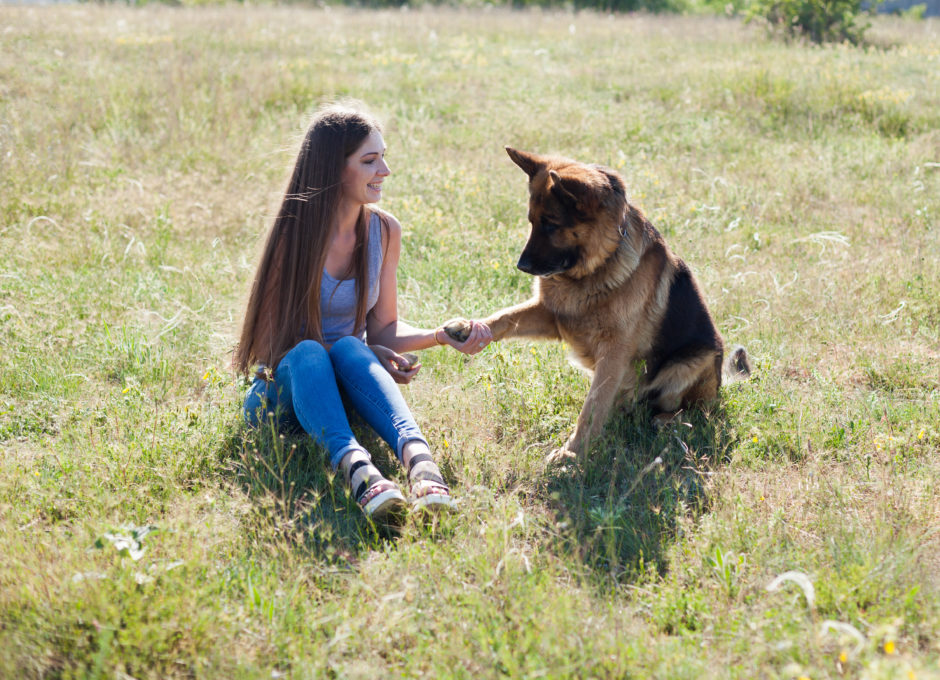 15 Tricks to Teach Your German Shepherd Puppy