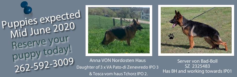 German Shepherd Puppies For Sale IL Summer 2020