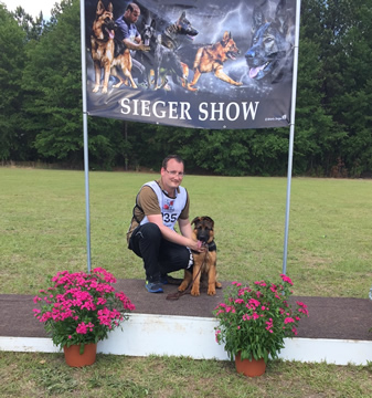 Roche's German Shepherds at the 2017 USA Sieger Show