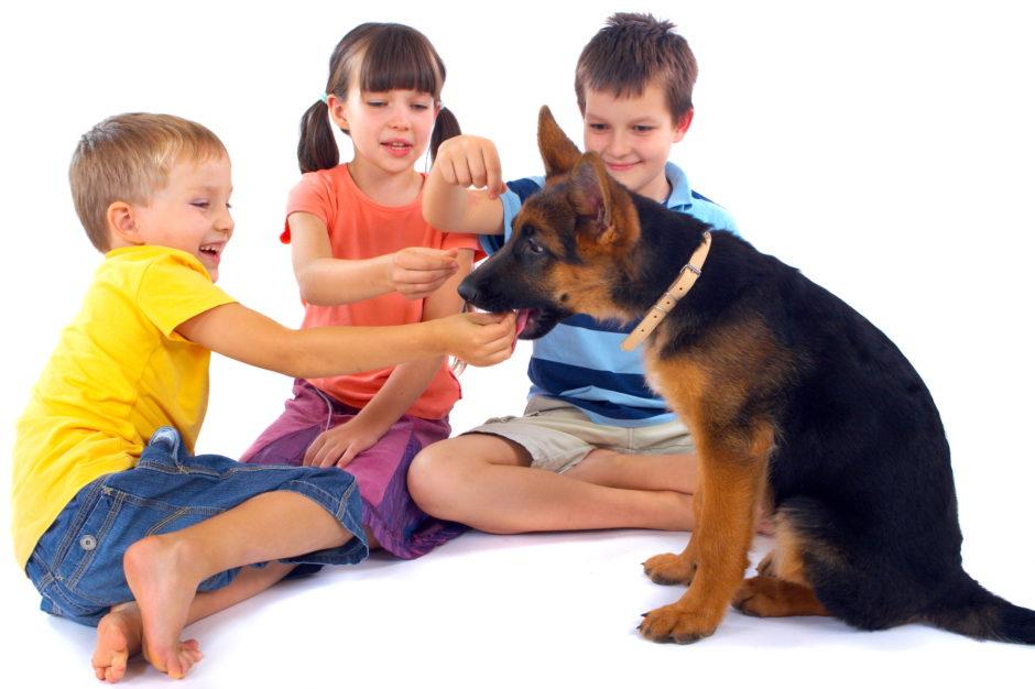 Indoor Games for Your German Shepherd Puppy