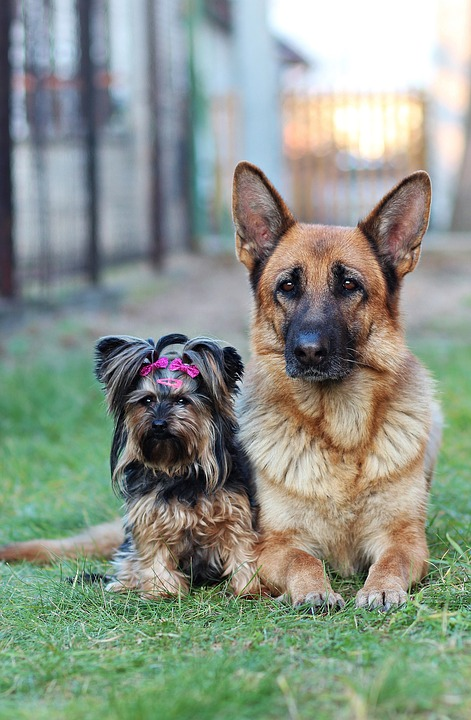 Reasons that Make Your GSD the Best Pet Ever