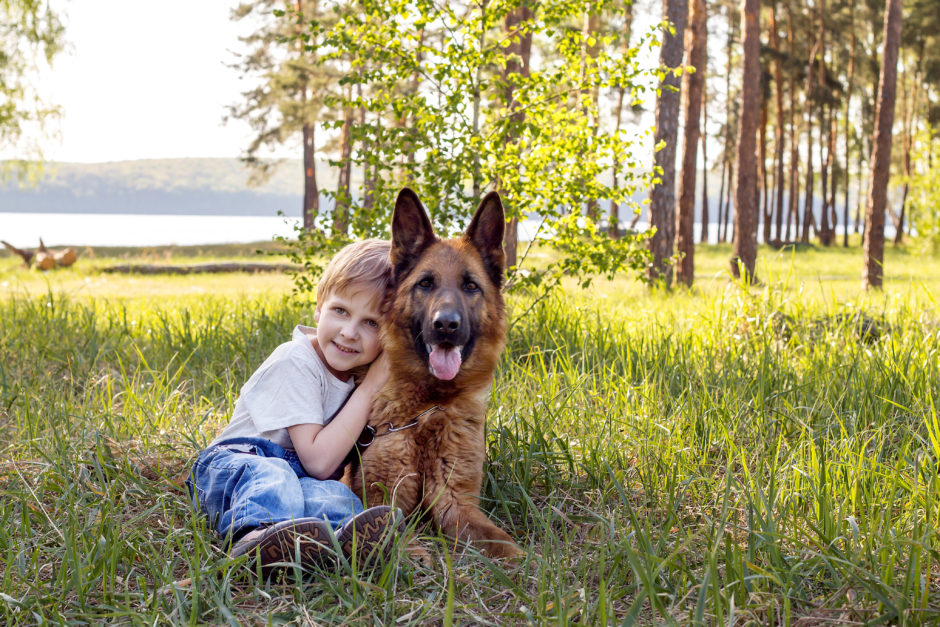 Why German Shepherd Puppies Are Great for Families With Children