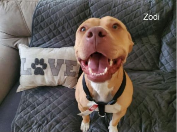October is National Pitbull Awareness Month