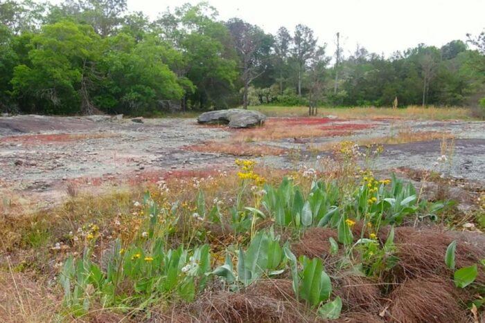 Johnson Park Recreation Center landscape preview