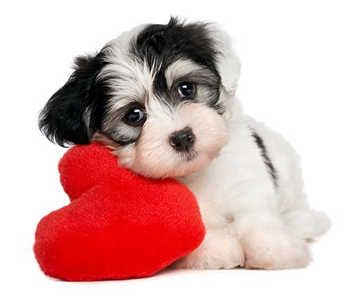 Doggie_Heart