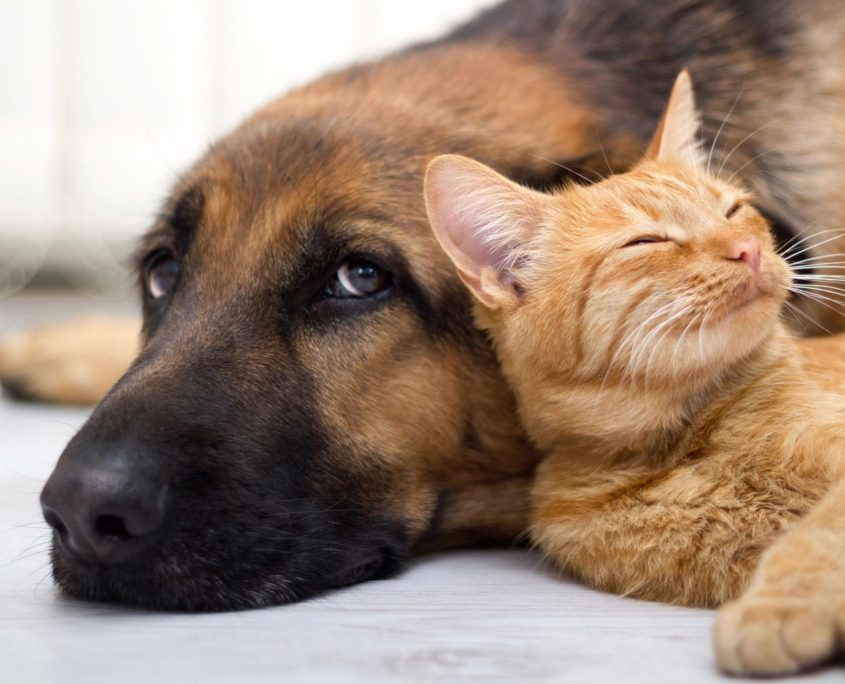 dog and cat with pet insurance