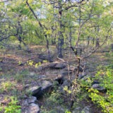 Wooded Rural Acreage in North Texas