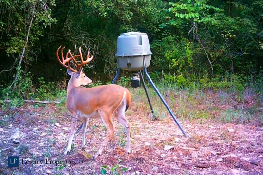 Dixon Creek Ranch | Tract 2