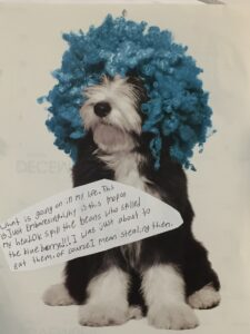 small dog with a blue clown wig on his head and covering his eyes