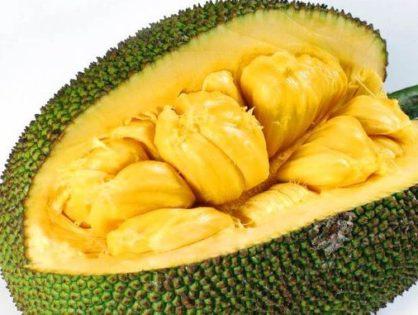 "Transcript for ""Jackfruit - A Jack of All Fruits"" Podcast"