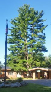 Last year the tree near the main entrance at Kettunen Center had to be removed due to safety concerns.