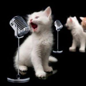Kitty microphone