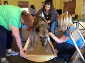 Canine Pilates Class