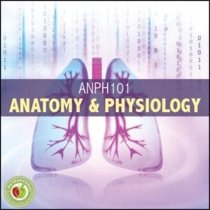 anatomy physiology course nutraphoria