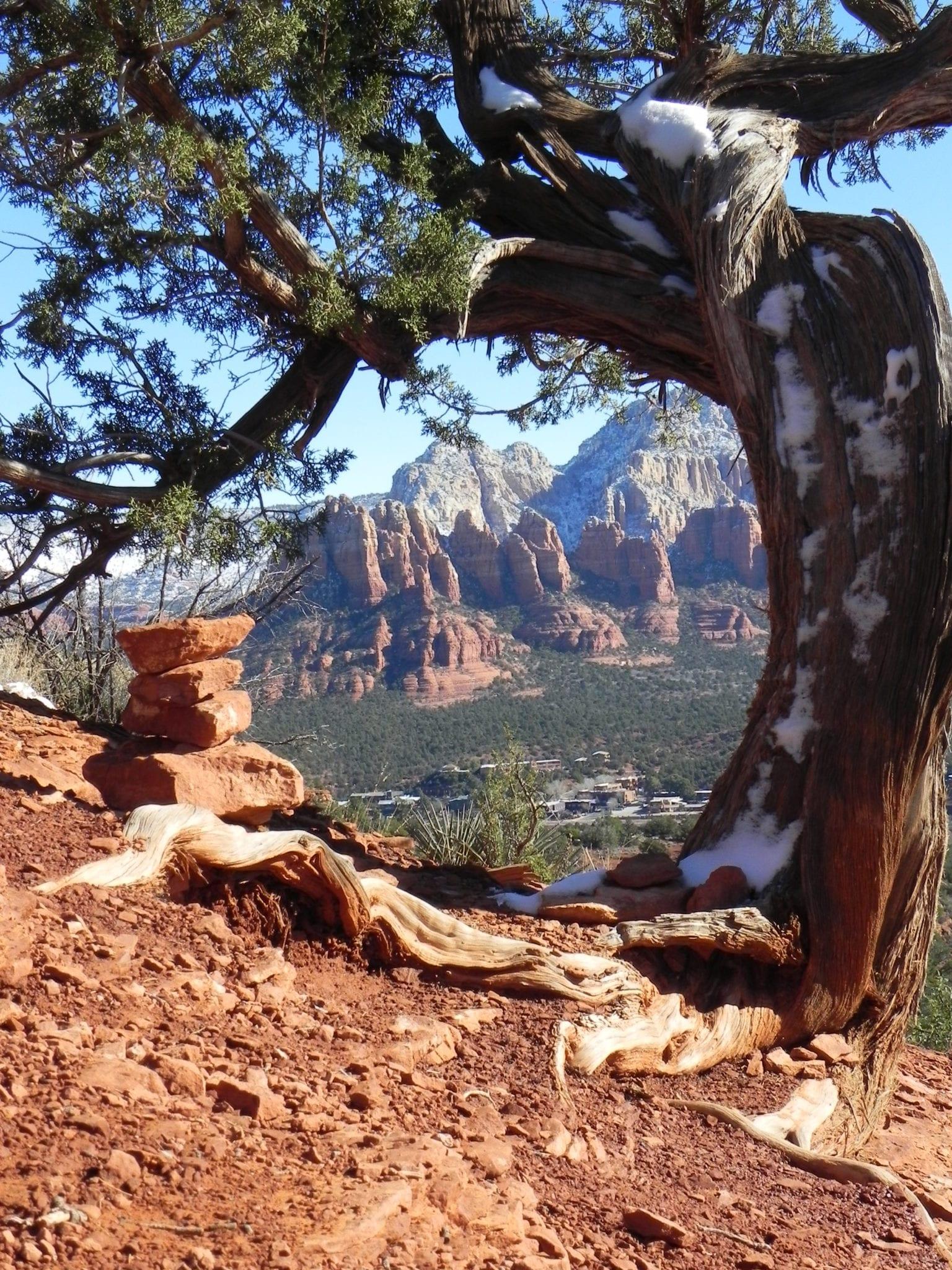 Sedona Vortex Twisted Trees at Airport Mesa Vortex