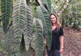 Ciri-ciri dan Harga Philodendron Patriciae