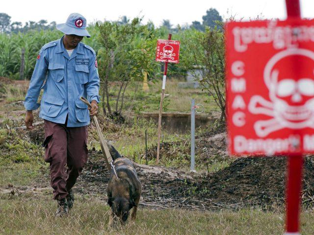 Cambodia's most dangerous job?