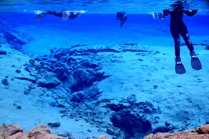 Snorkeling in Silfra & Whale Watching
