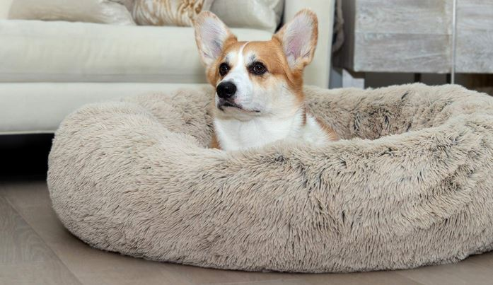 Caring for Canines - Quick tips for looking after a new puppy comfortable puppy bed - dogspeaking.com