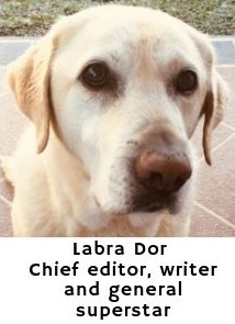 Labra Dor, Chief editor talks about the best dog houses