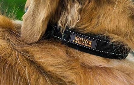 Mighty Paw neoprene dog collar - best dog collar