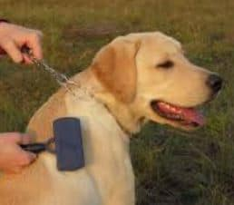 Labra gets a comb - Dogspeaking