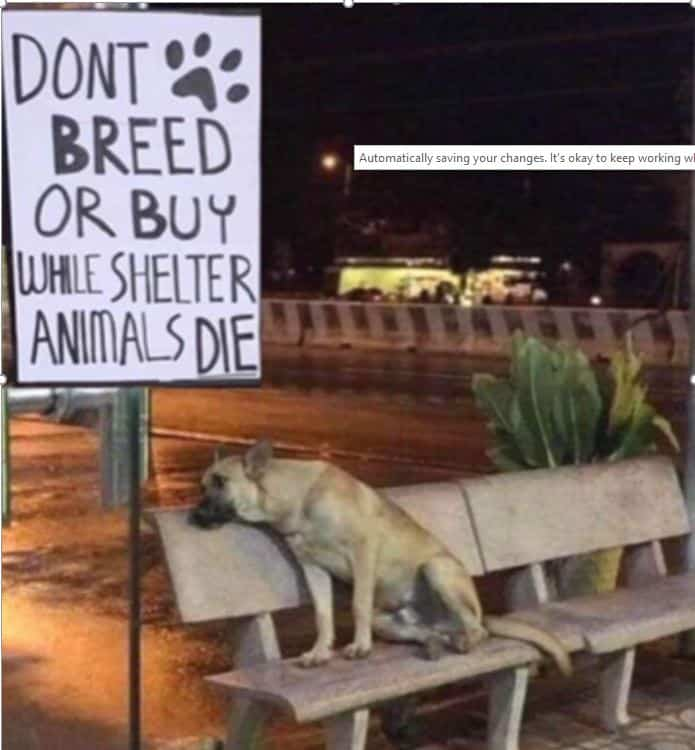 What is the best dog for you? Don't breed or buy while animals in shelters die. Dogspeaking.com