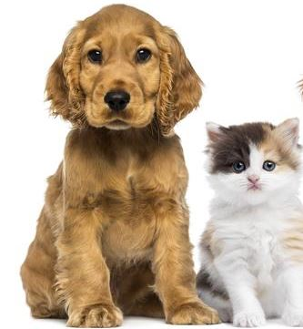 When to take dog to vet. Pup and Cat at vet. Dogspeaking
