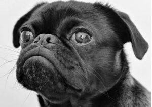 confused dog - what do you mean NO - dogspeaking.com